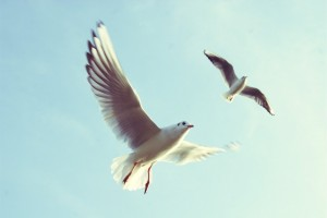Progetto Albatros